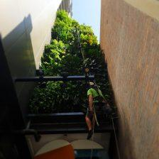 Elevated Vertical Garden Maintenance