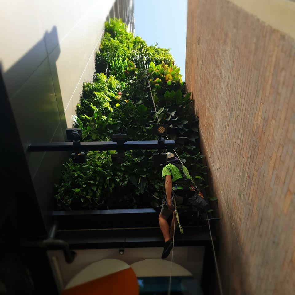 Elevated and Vertical Garden Maintenance